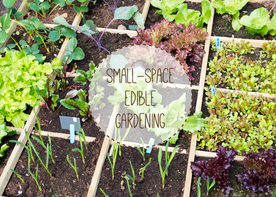 Square-metre raised bed with text overlay.