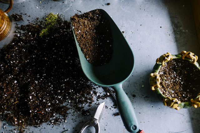 Potting mix with trowel.