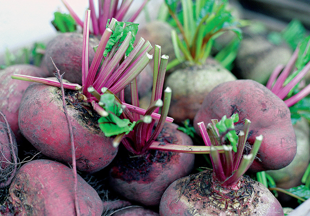 Indoor Beetroot