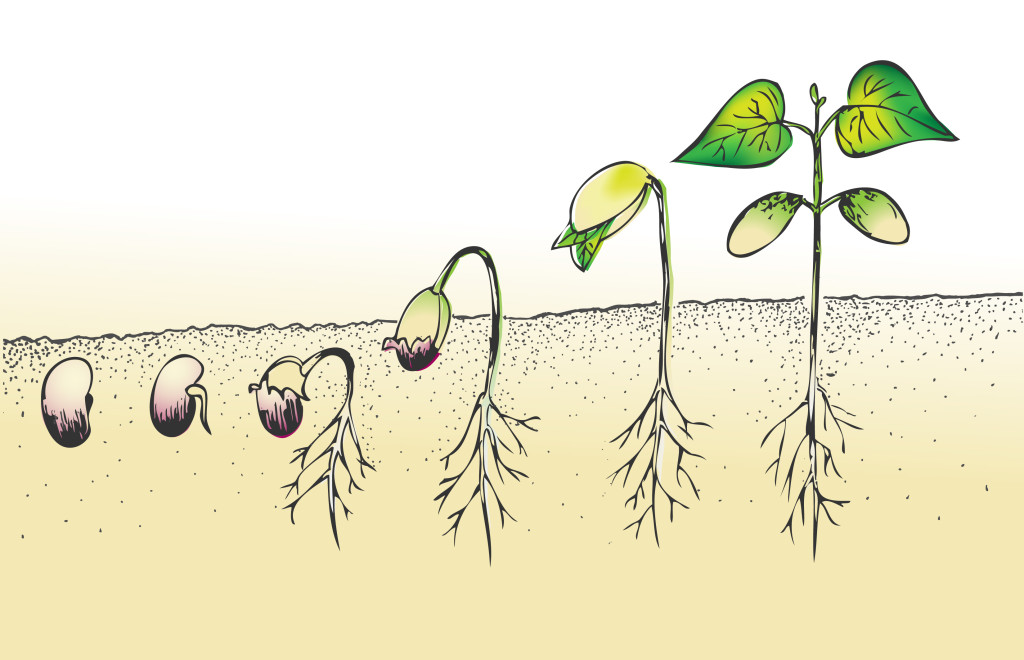 Stages of a Plant