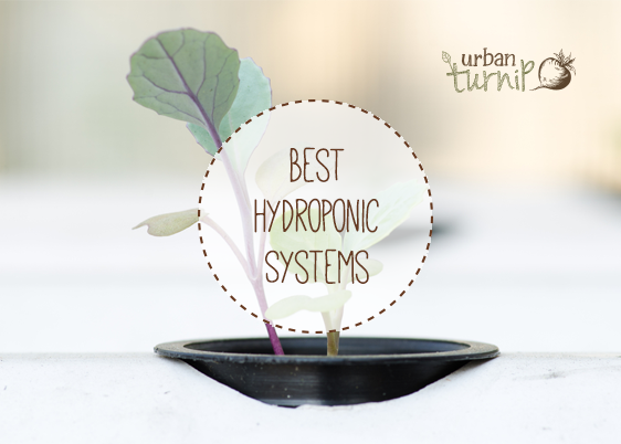 Best Hydroponic Systems: Top Five Reviews For 2017