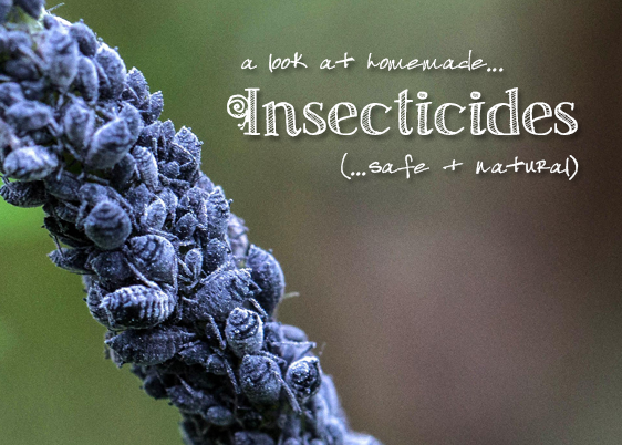 A look at homemade insecticide recipes.