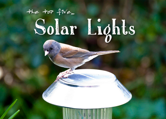Five Best Solar Powered Garden Lights for 2016 Our Reviews and