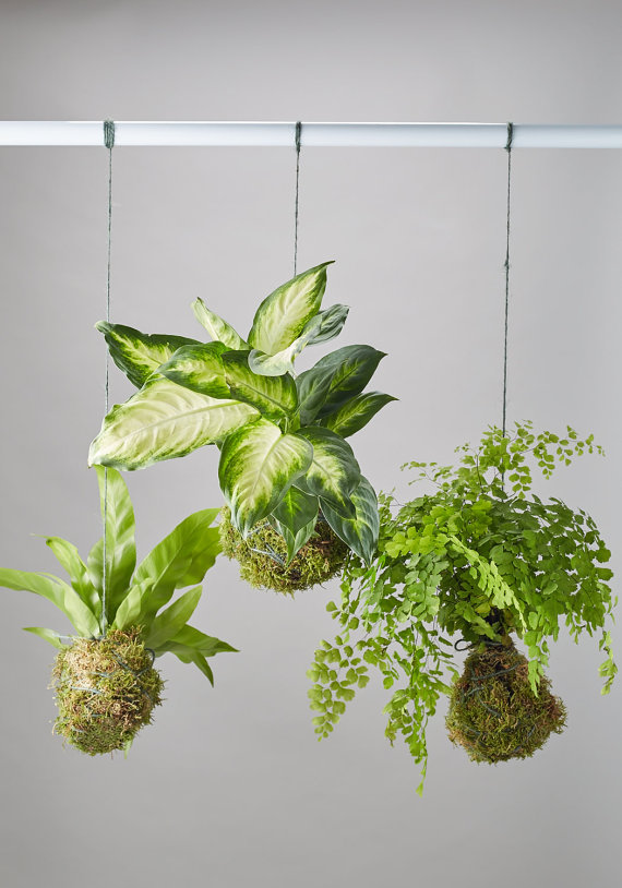 DIY Kokedama kit.