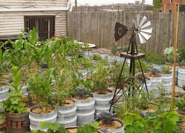 Small urban garden.