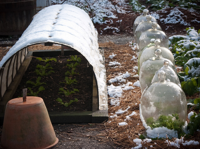 Cloches and Polytunnel