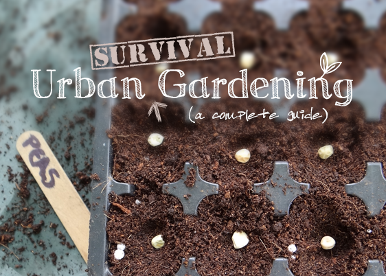 Urban survival gardening the in depth guide urban turnip urban survival gardening a comprehensive grow guide for city dwellers solutioingenieria Image collections