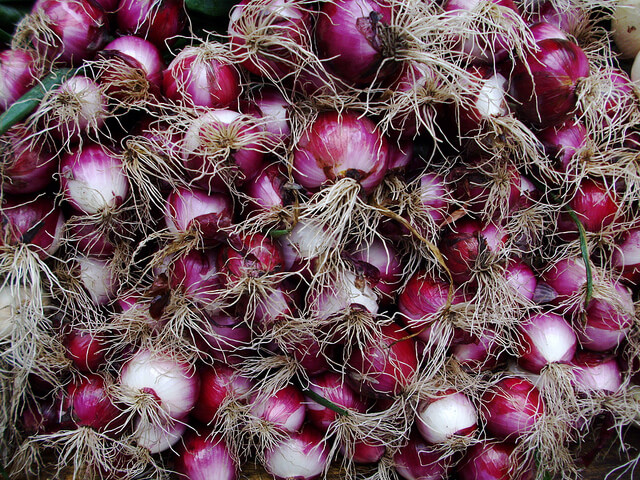 Large cluster of purple spring onions.