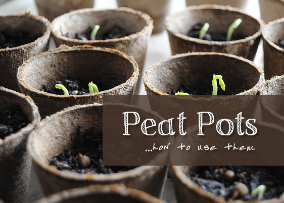 Peat pots with text overlay.
