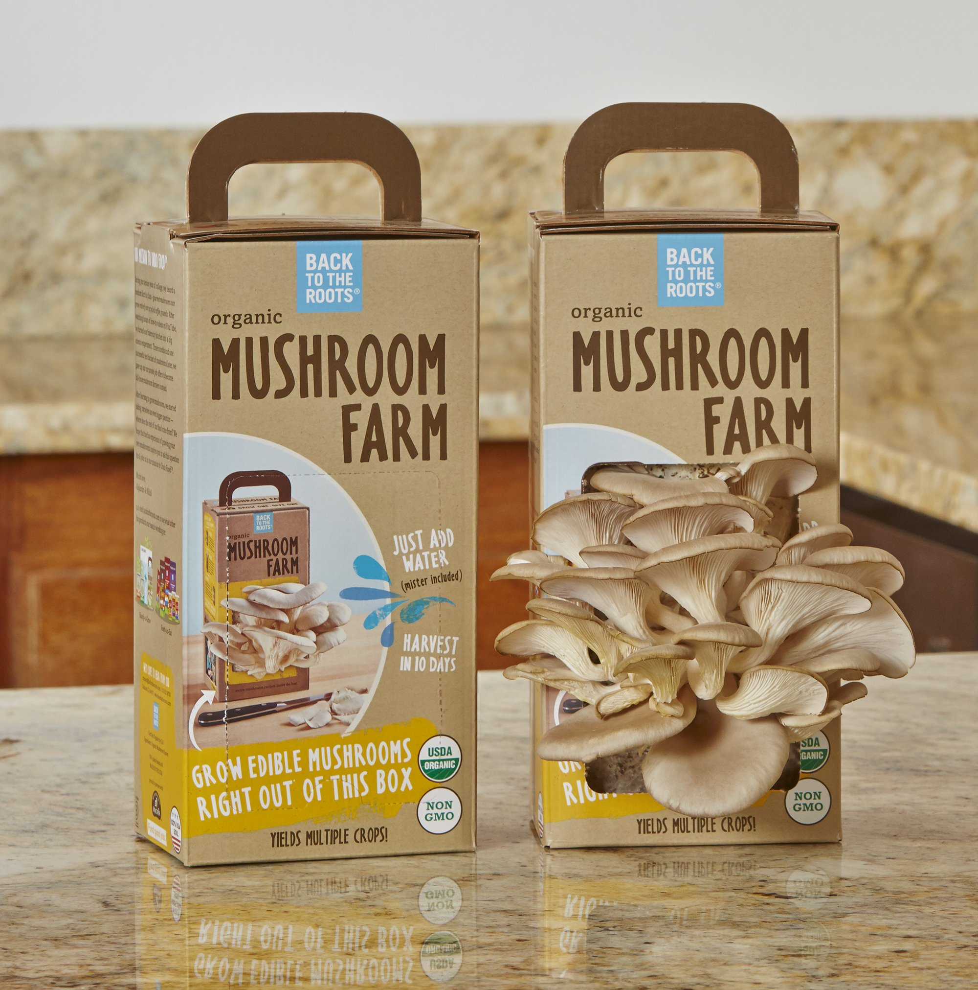 Best Mushroom Grow Kits Urban Turnip