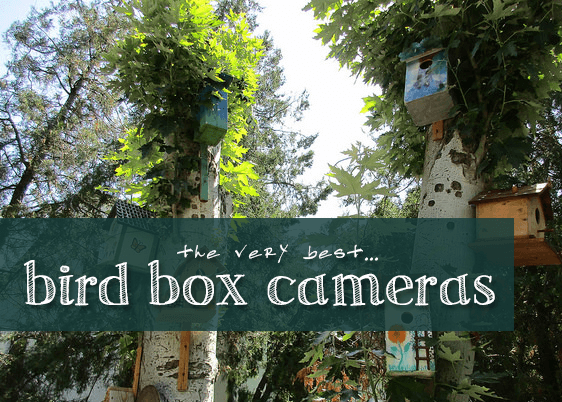 Picture of bird boxes with text overlay.