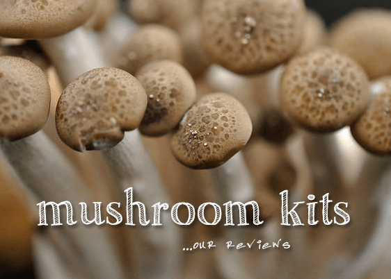 Mushrooms with text overlay.