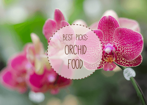 Best Orchid Feed