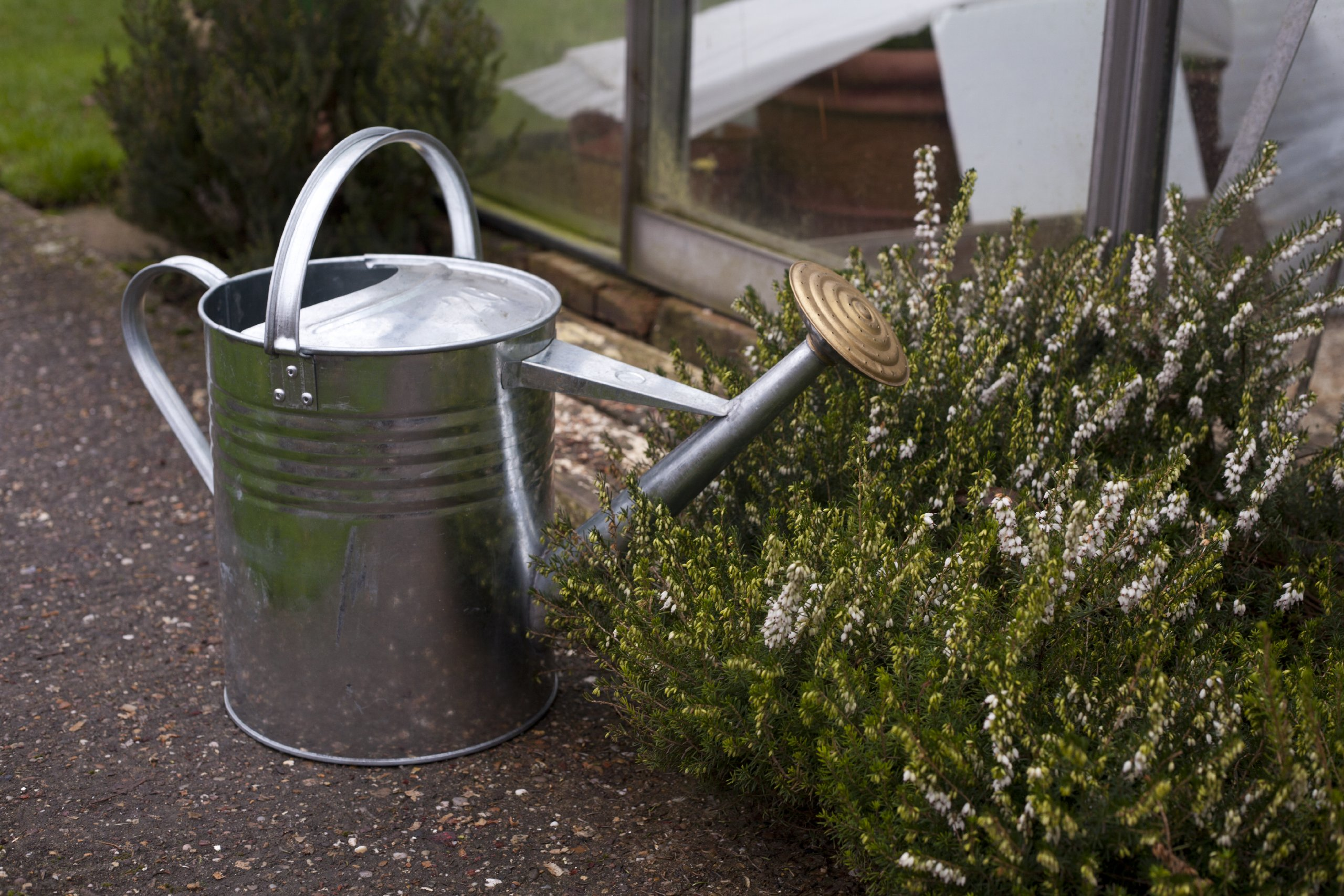 Vintage Watering Cans: A Whimsical Guide - Urban Turnip