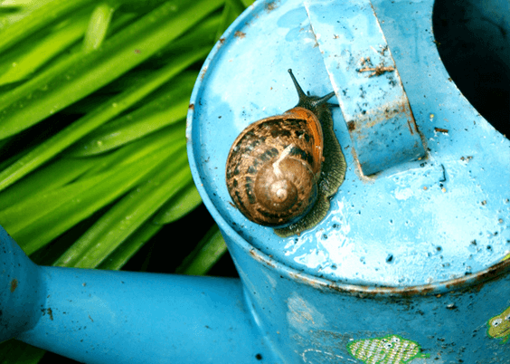 Vintage watering can.