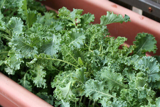 Container Kale