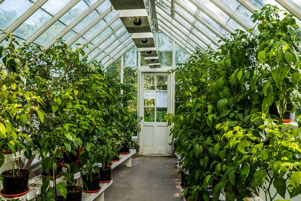How to pick a greenhouse kit